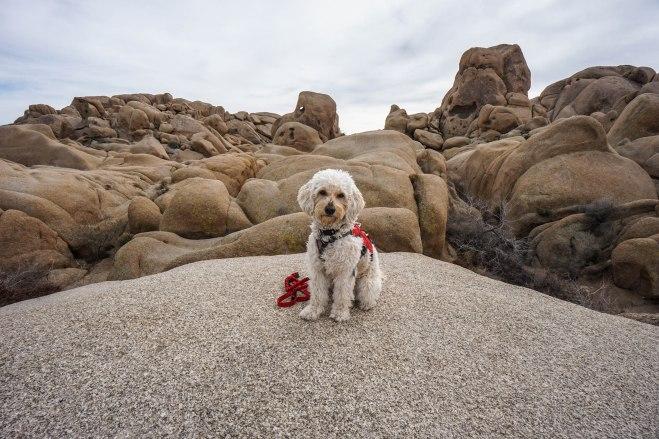 Isla On the Rocks