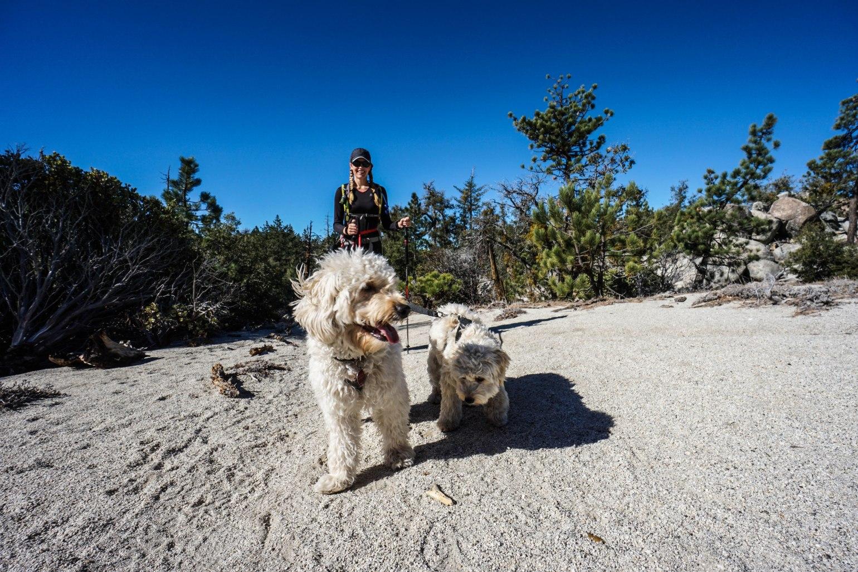 Black Mountain Idyllwild Dogs