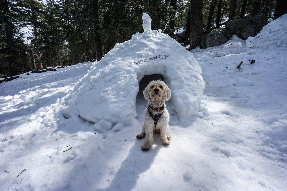 National Dog Day Hiking Dog