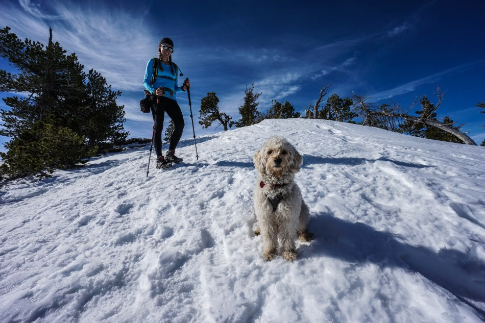 Mt. Baden Powell Snow Vincent Gap