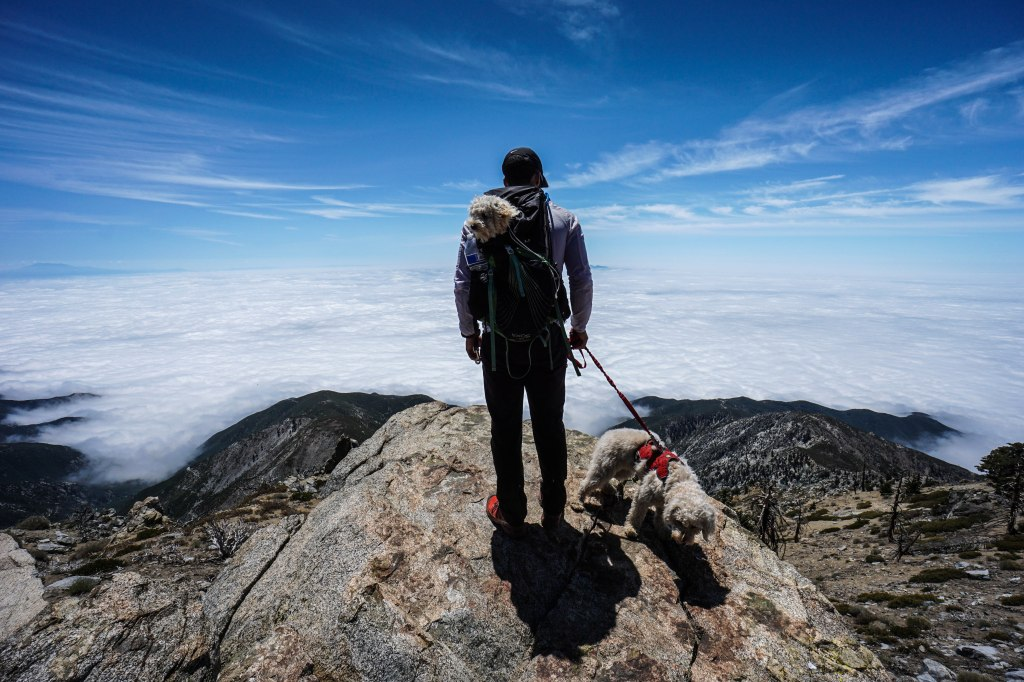 Cucamonga Peak via Icehouse Canyon With Dogs