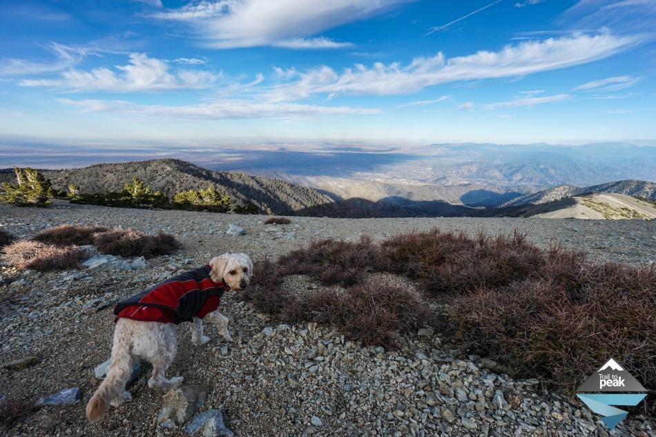 Backpacking Camping Overnight Mt. Baldy via Ski Hut Trail