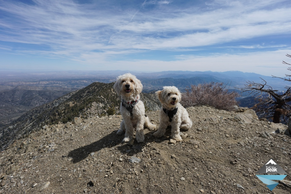 How to trail a dog for hiking and backpacking