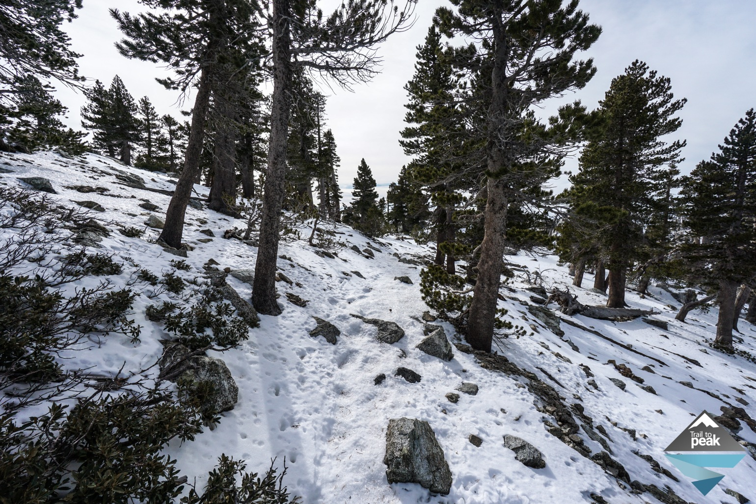 Mt Baldy Winter Hike Hiking December In The Snow With Dogs