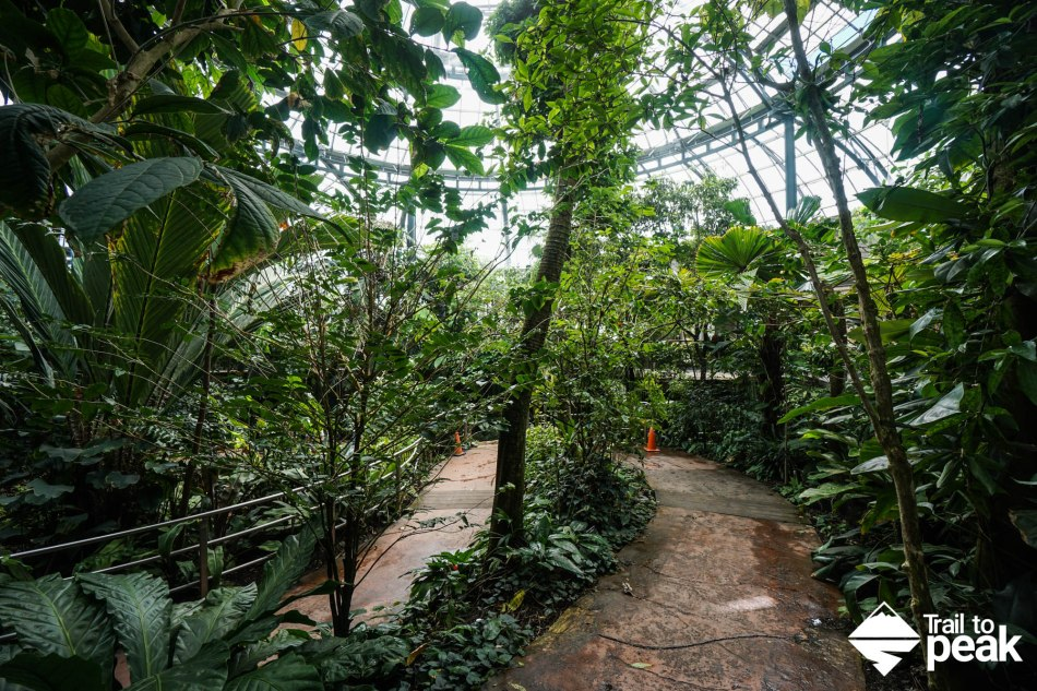 The Rose Hills Foundation Conservatory for Botanical Science Huntington Botanical Gardens Rain Forest