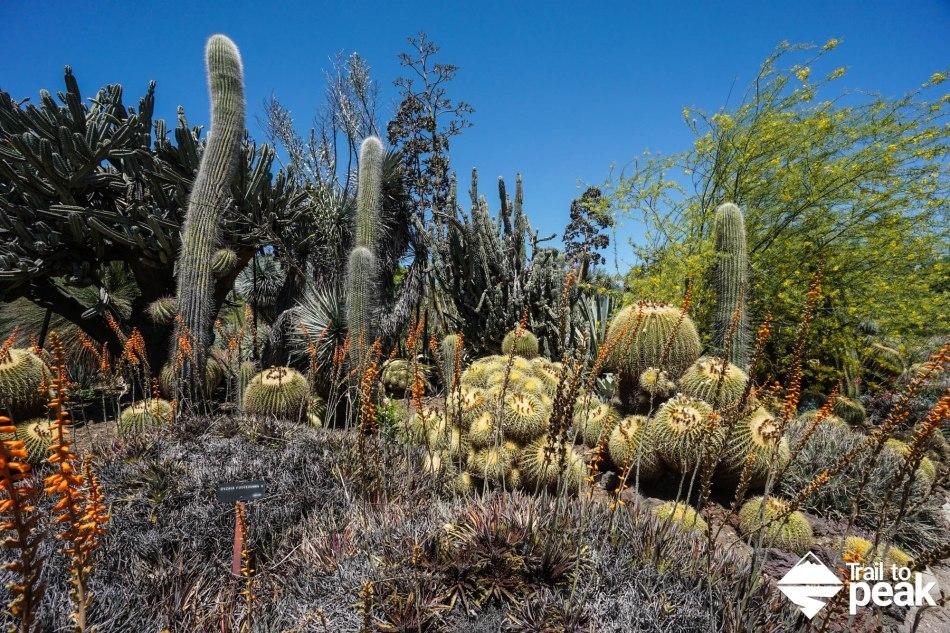 The Huntington Desert Garden