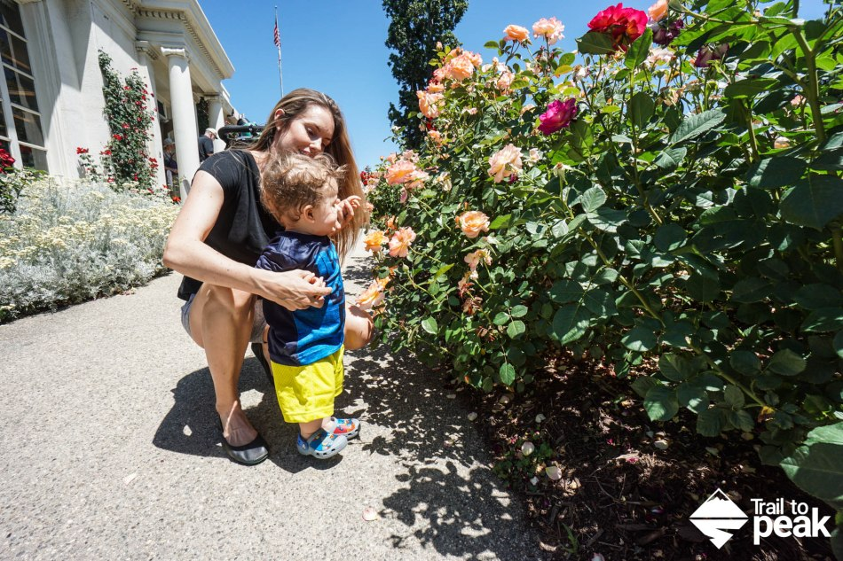 The Huntington Rose Gardens